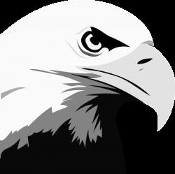 Eagle Head Animal free black white clipart images clipartblack ...
