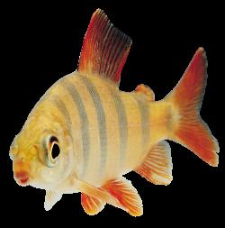 Fish Seventeen | Isolated Stock Photo by noBACKS.com