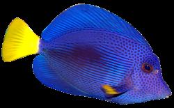tropical fish clipart tropical fish clipart 11 fish pinterest ...