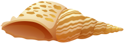 Sea Shell PNG Clip Art - Best WEB Clipart