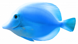 Collection of 14 free Fishes clipart light blue. Download on ubiSafe