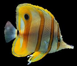 Ornamental fish Aquarium Clip art - fish 988*848 transprent Png Free ...