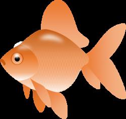 Image of Goldfish Clipart #9973, Gold Fish Red Ryukin Free Fish Clip ...