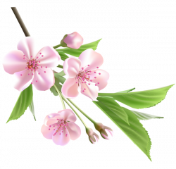 Spring Branch with Pink Tree Flowers PNG Clipart | Virágok png ...