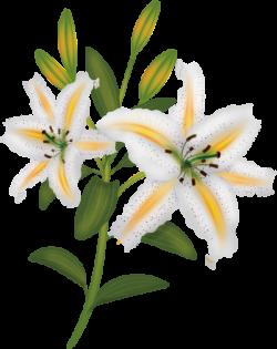 fleurs,flores,flowers,bloemen,png | Kwiaty transparent | Pinterest ...