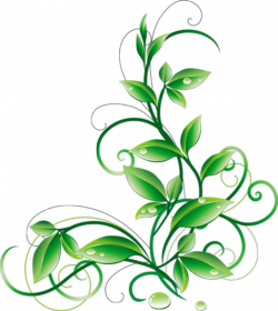 Floral Green Leaves And Water Droplets PNG Clipart - iCliparts.com ...