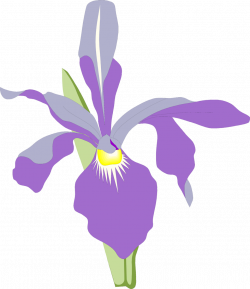 Orchid | Free Stock Photo | Illustration of a purple orchid flower ...