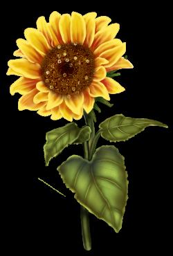 fleurs,flores,flowers,bloemen,png | Sunflower Clip Art | Pinterest