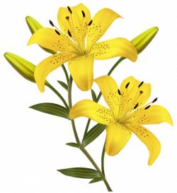 Yellow Lilies PNG Clipart Image | Travel around etsy and not just ...