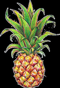 tumblr fruit picsart pineapple