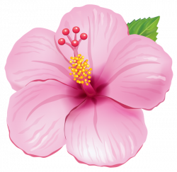 Pink Exotic Flower PNG Clipart Picture | hawaiano | Pinterest ...