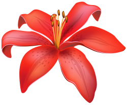 CLIPART FLOWERS | Red Lily Flower PNG Clipart - Best WEB Clipart ...