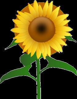 Free Image on Pixabay - Sunflower, Blooms, Blossom, Golden ...