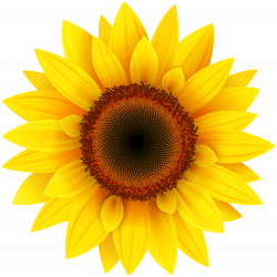 Sunflower PNG Clipart Picture | Gallery Yopriceville - High-Quality ...