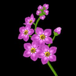 Pink Flower Transparent Clipart | PNG Flowers | Pinterest | Flower ...