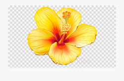 Hibiscus Transparent Image Free - Tropical Flower Clipart ...