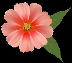Orange Flower PNG Image Clipart | Clip Art | Pinterest | Orange ...