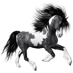 White Black Horse PNG Clipart Picture | Gallery Yopriceville - High ...