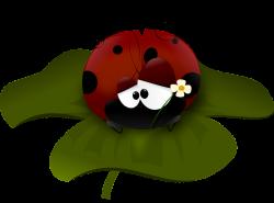 Ladybug Flower Bug Wings Insect transparent image | Ladybug ...