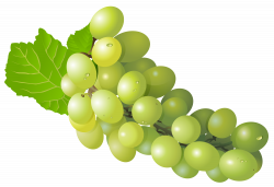 Grape PNG Free Clip Art Image | Gallery Yopriceville - High-Quality ...