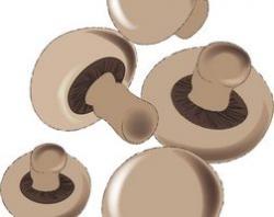 Mushroom food clipart » Clipart Portal