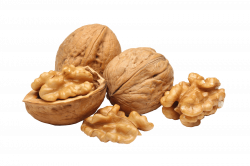 Walnut Group transparent PNG - StickPNG
