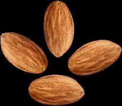 Almonds Transparent Clip Art Image | Gallery Yopriceville - High ...