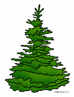 Fir Tree clipart spruce tree - Pencil and in color fir tree clipart ...