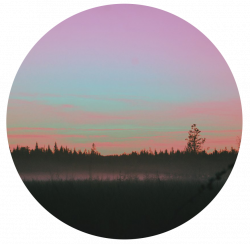 tumblr forest nature sunset circle...