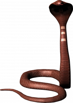 Cobra snake PNG image, free download picture   Adobe photoshop ...
