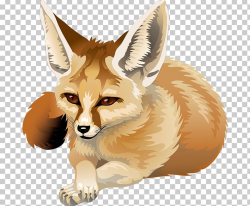 Red Fox Fennec Fox Canidae PNG, Clipart, Animal, Animals ...