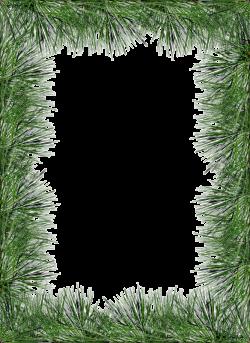 Transparent PNG Pine Photo Frame | Stationary Borders | Pinterest ...