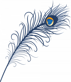 Peacock Feather Clipart at GetDrawings.com   Free for personal use ...