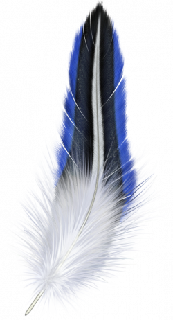 Blue and White Feather Clipart   Gallery Yopriceville - High ...