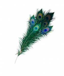 Peacock Feather Png by Asher-Bee on DeviantArt