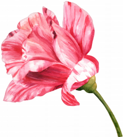 Watercolor Flower PNG Clip Art Image | Gallery Yopriceville - High ...