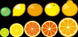 Clipart - Citrus Fruits