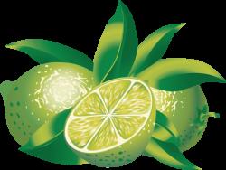 Clip Art of Citrus Fruit: Limes | jean savoy | Pinterest | Citrus ...