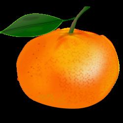 Orange Fruit   Free Stock Photo   Illustration of an orange   # 14459