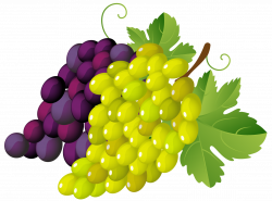 Painted Grapes PNG Clipart | Gallery Yopriceville - High-Quality ...