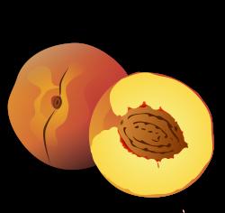 Clipart - Peach
