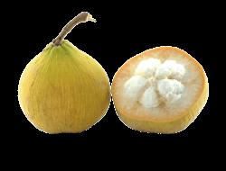 Halved Santol Fruit transparent PNG - StickPNG