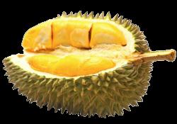 Half Durian Fruit transparent PNG - StickPNG