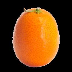 Whole Kumquat transparent PNG - StickPNG