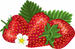 Strawberry Transparent PNG Pictures - Free Icons and PNG Backgrounds