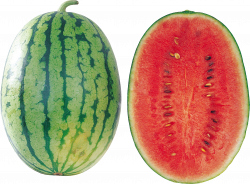 Watermelon png images, free download