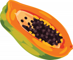Fruit Papaya Clip art - Yellow hand painted papaya 1500*1228 ...