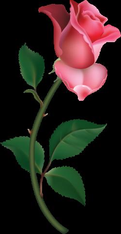 Large Pink Rose Bud Painting PNG Clipart | frames | Pinterest | Rose ...