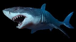 Shark PNG | Animal PNG | Pinterest | Shark and Animal