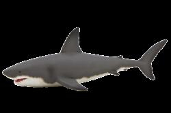 Sharks PNG images free download, shark PNG